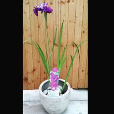 Dorset Aquatics have donated this beautiful  plant and pot for our raffle THIS SATURDAY we have some absolutely wonderful prizes. #events #hairsalon #prizes #raffle #hairdressers #win #tickets #event #anniversary #sherborne #dorset