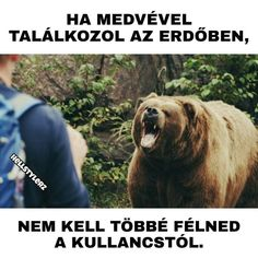 Brown Bear, Funny Moments, Good Day, Haha, In This Moment, Comics, Words, Animals, Nice