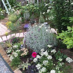 Bedroom/植物/ガーデニング/ガーデン/手作りの庭/ラダーDIY...などのインテリア実例 - 2016-05-30 05:55:10 | RoomClip (ルームクリップ)