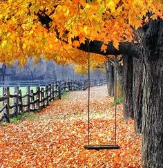 Autumn Swing...take your family to celebrate fall in the beauty of the midwest color  http://www.foxnews.com/travel/2013/09/13/taking-kids-10-plus-ways-to-celebrate-fall-in-midwest/