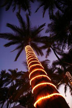 Christmas Palm, Maui, Hawaii