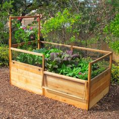 x Raised Garden Bed With Hinged Fencing and Trellis - Bepflanzung Raised Garden Bed Kits, Building A Raised Garden, Raised Beds, Small Space Gardening, Cactus Y Suculentas, Growing Vegetables, Growing Tomatoes, Shade Garden, Organic Gardening