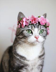 Cat Flower Crown - Lotus Pink - SUDDENLY CAT
