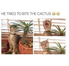 Get this >> Funny Cat Photoshop Pictures xoxo