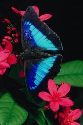 color grabber: get hex codes from images on webpages