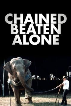 The only way to stop the abuse is to STOP BUYING TICKETS! Say NO to captivity for entertainment. boycot the circus please Stop Animal Cruelty, Mundo Animal, Animal Welfare, Animal Rights, Animal Rescue, Sick, Entertaining, World, Save Animals