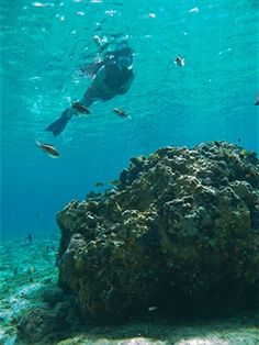 Getty Images : Cozumel, Mexico, Snorkeling