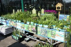 Assortiment waterplanten