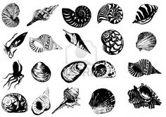 seashell tattoos 6559597-vector-illustration-of-different-sea-shells.jpg 401×283 pixels