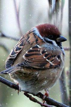 Воробей A selection of bird photos All Birds, Little Birds, Love Birds, Beautiful Creatures, Animals Beautiful, Cute Animals, Most Beautiful Birds, Pretty Birds, Photo Animaliere