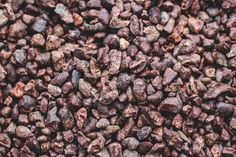 Cacao Powder vs Cocoa Powder - Pure and Plant-Based Cacao Nibs Cacao Powder Benefits, Raw Cacao Powder, Cacao Nibs, Homemade Chocolate, Chocolate Flavors, Cacao Beans, Theobroma Cacao, Cocoa Butter, Healthy Options