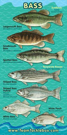 Bass Family Banner