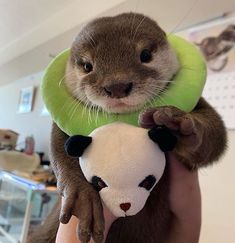 Otter of the day! Cute Little Animals, Cute Funny Animals, Cute Dogs, Otters Cute, Baby Otters, Baby Sloth, Otter Love, Cute Animal Pictures, Cute Creatures