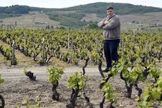 Le vin bio sent le soufre Agriculture Bio, Wine And Spirits, Our World, Vineyard, French, Nature, Outdoor, Life, Ruin