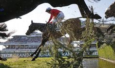 Grand National 2017: Blaklion trainer left pondering result after running out of steam - https://newsexplored.co.uk/grand-national-2017-blaklion-trainer-left-pondering-result-after-running-out-of-steam/