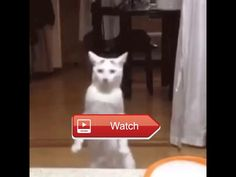 😸 funny cat 😼 😽 on Pet Lovers 😻