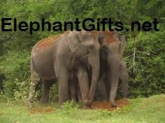 Visit ElephantGifts.net for more funny elephant photos and videos Elephant Pictures, Elephants Photos, Funny Elephant, Photo And Video, Videos, Animals, Animales, Animaux, Elephant Photography