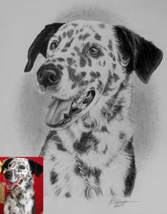 Schlueter Art Works Pet Portraits, hand drawn highly detailed sketches done from your photos. Reputable & reasonably priced. Great gift idea for any pet owner. Visit http://www.gensart.net for pricing & size options.