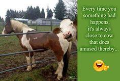 Když se vám stane něco špatného,vždycky je na blízku nějaká kráva,která se tím baví...