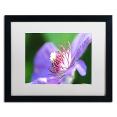 Clarity by Monica Mize Matted Framed Photographic Print
