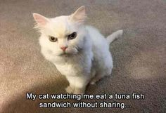 Funny Animal Pictures Of The Day - 23 Pics #funny #picture