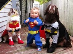 Toddler And Dogs In Cute Costumes | Click the link to view full image and description : )