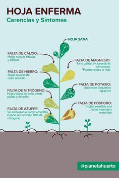 Eco Garden, Vegetable Garden Design, Green Garden, My Secret Garden, Plantation, Green Life, Growing Vegetables, Garden Projects, Gardening Tips