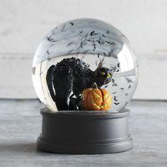 cat in snow globe.