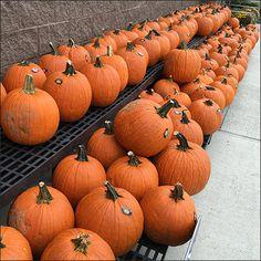 Pumpkin Windrows Run Wild On Tiered Dunnage Racks – Fixtures Close Up Meaning Of Joy, Halloween Displays, Pumpkins, Happy Halloween, Retail, Orange, Fruit, Pumpkin, Squash