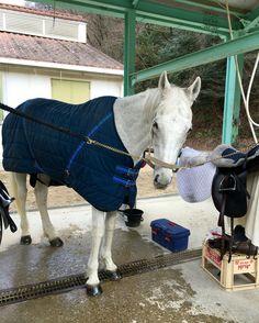 Jahan, dalle 11:00 al 10 febbraio 2016 per il corso II con istruttore Toyoshima con gli altri 5 cavalli ; Grants, Ramses, Fuji, Hound, Pocky. Jahan era l'ultimo. Tuttavia era sempre pesante, l'inizio del galoppo non andava bene sia a destra che a sinistra. Dovrei praticare ancora con lui.