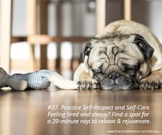 7 Indoor Dog Games to Play With Your Dog Dog Training Methods, Basic Dog Training, Dog Training Techniques, Training Dogs, Dog Sleeping Positions, Sleeping Dogs, Floor Sleeping, Puppy Obedience Training, Shelter Dogs