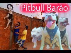 🎥 CANAL PITBULL BORA BRASIL