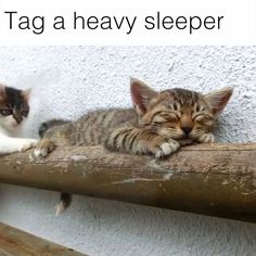 This cat can sleep through anything   Credit: SKYtomo