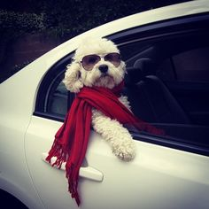 I'll never be as classy as this dog