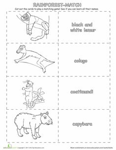 On this jungle adventure, your little explorer will learn his rainforest animals! Just color, cut out, and play this printable memory match game.