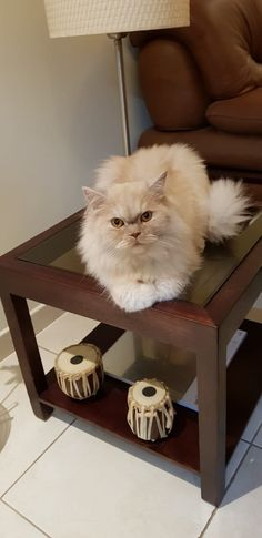 Whisky, Cats, Table, Animals, Furniture, Home Decor, Gatos, Animales, Decoration Home