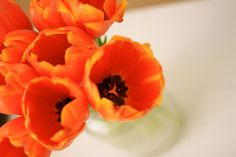 Orange flowers bright up the day..