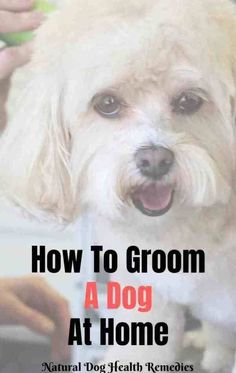 Dog grooming - Learn How to Groom A Dog At Home DIY Dog Grooming – Dog grooming Dog Grooming Tools, Puppy Grooming, Dog Grooming Supplies, Cleaning Dogs Ears, Dog Cleaning, Trimming Dog Nails, Puppy Haircut, Dog Haircuts, Dog Teeth