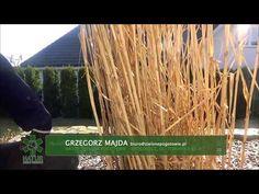Jak przyciąć trawy ozdobne? - YouTube Herbs, Grill, Youtube, Garden, Garten, Herb, Gardens, Tuin, Spice