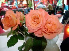 v růžovém salónku (48 pieces)