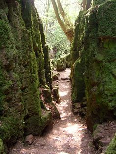 Puzzlewood is an ancient woodland site in the Forest of Dean in  Gloucestershire, England. It has become a popular location for filming,  and as you may know, J.R.R. Tolkien has used this woodland as  inspiration for Lord of the Rings