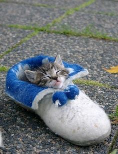 """Just a kitten in a shoe!"""