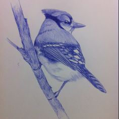 Tonight's sketch I chose to do a Blue Jay with blue Bic pen.