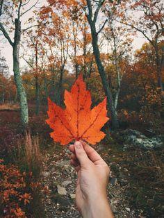 leaves, autumn, and fall image Autumn Cozy, Fall Winter, Half Elf, Autumn Aesthetic, Orange Aesthetic, Nature Aesthetic, Seasons Of The Year, Autumn Photography, Foto Pose