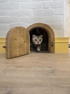릴리의 팹디 :: 커플과 3마리의 고양이를 위한 로프트 스타일 아파트 인테리어 in 대만