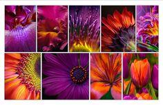 colour purple and orange