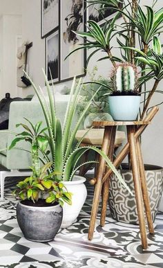 Leafy indoor corner. Visit houseandleisure.co.za for more