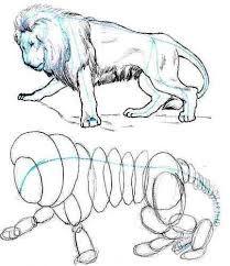 Como dibujar la cara de un gato paso a paso  Aprendo a dibujar