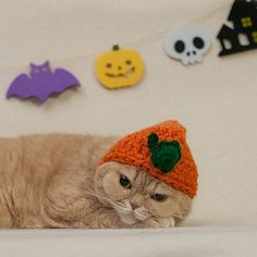 this kitty is ready for Halloween!