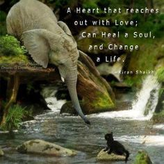 A Heart that Reaches out with Love Can Heal a Soul and Change a Life.